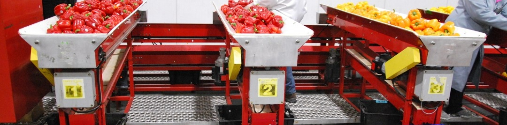 produce-packing-conveyor